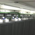 Kolst, shared hosting low cost